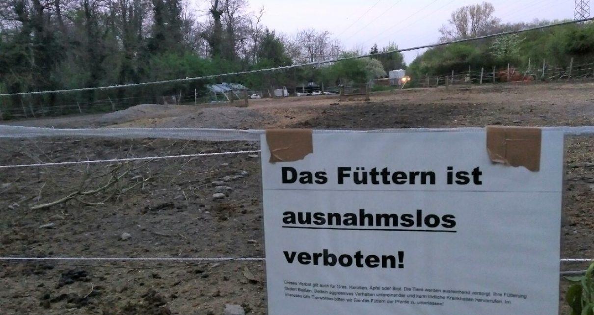 pferdeschaender-rieselfeld-freiburg