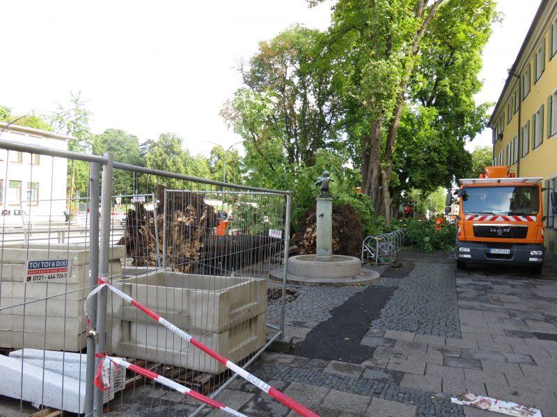 Baum entwurzelt in Freiburg