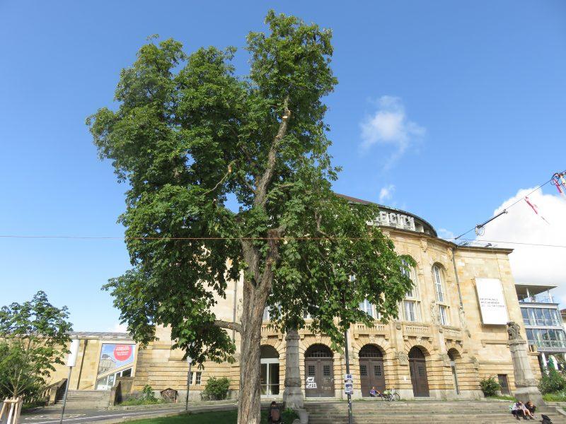 Baum Stadttheater Freiburg unwetter
