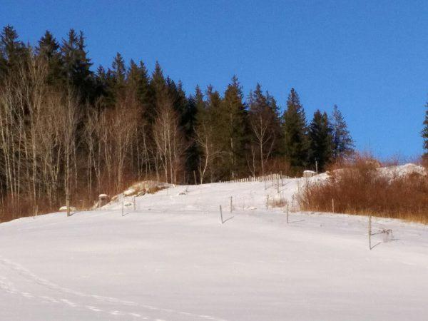 Schnee - Titisee - Feldberg