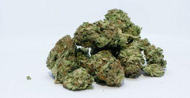 cannabis-freiburg-schwarzfahrer-pixabay