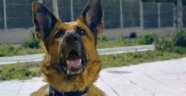 https://www.freiburg-nachrichten.de/2017/12/28/freiburg-polizei-liefert-sich-verfolgungsfahrt-opel-corsa-fahrer-unter-drogen/