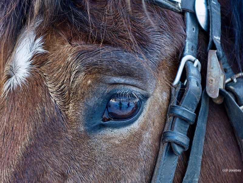 pferd-pixabay