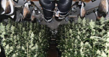 Marihuana Bad Vilbel Villa Plantage