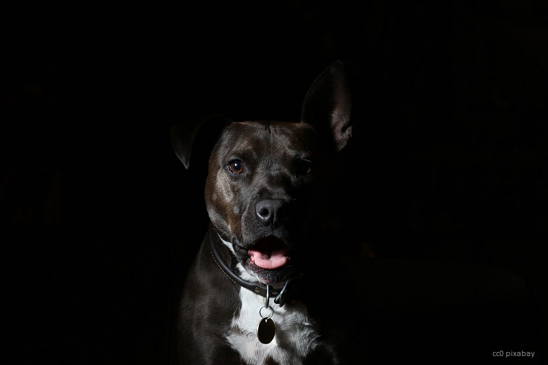hund-weingarten-kopfnuss-pixabay