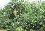 amazonas-brasilien-regenwald
