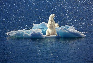 klima-eisbär-paket