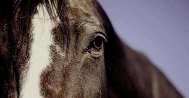 pferd-missbrauch
