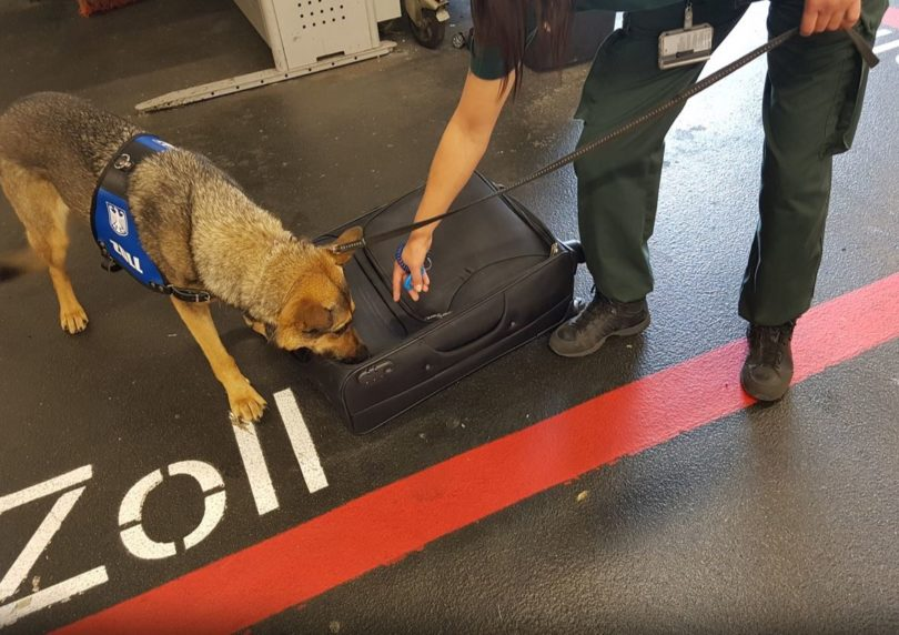 zoll-drogenhund-koffer