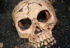 skelett-schädel