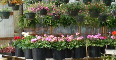pflanzen-gärtnerei-baumarkt