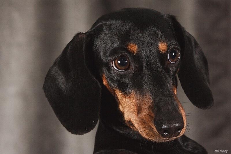 Hund-hartz4-urteil