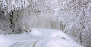 schnee-bäume-baum-winterlandschaft