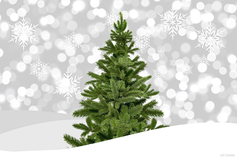 weihnachtsbaum-abholung-freiburg-2021