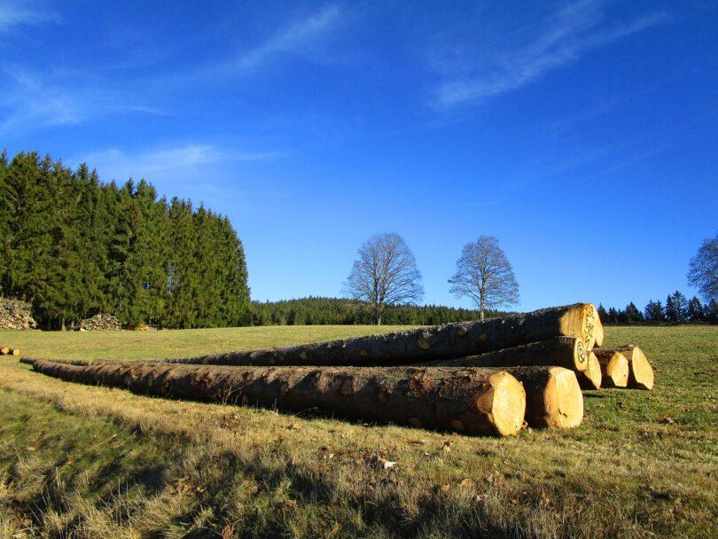 langholz-baumstämmen