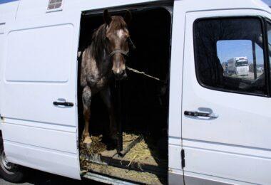 Pferd-in-transporter
