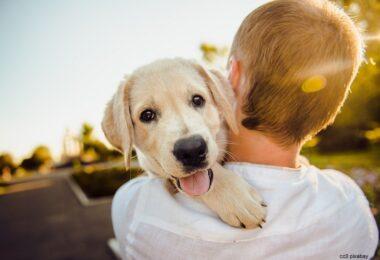 hund-hunde-führerschein