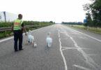 schwäne-autobahn-c-polizei